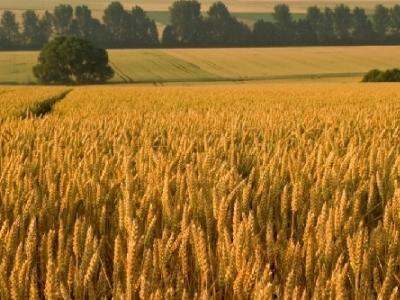 IMU terreni agricoli: c'è la soluzione