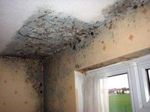 Muffa sui muri e sulle pareti di casa? Ecco cosa fare per eliminarla ...