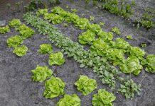 IMU orti terreni non propriamente agricoli