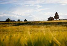 Terreni edificabili: dai Notai arrivano chiarimenti sul regime fiscale