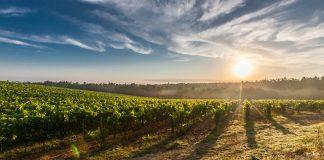 Agevolazioni acquisto terreni agricoli, di cosa si tratta?