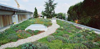 Tetti verdi, Enea: tutti i vantaggi che comportano nella stagione invernale