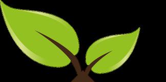 Ecobonus e sismabonus, per cessione del credito non occorre solo la parentela