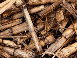 caldaie a biomasse